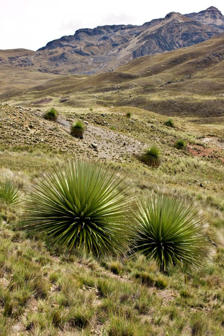 Danisco, Peru