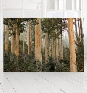 African Woods, print, Photographer Morten Larsen